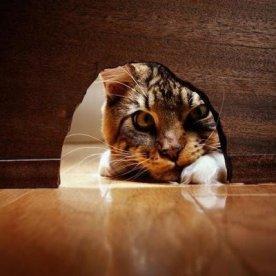 gato_curioso